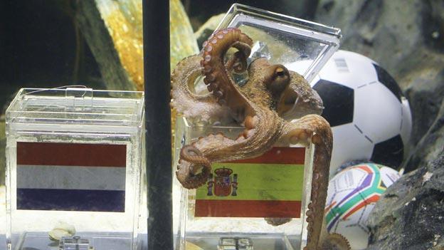 El pulpo Paul fue protagonista del Mundial.
